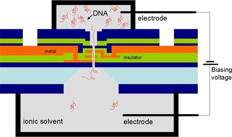 DNA transistor operation