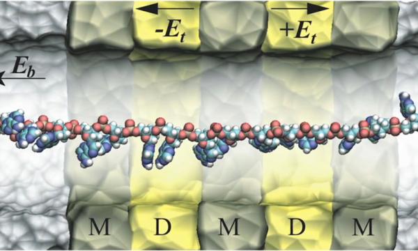 รูปที่ 1 แบบจำลอง DNA Transistor