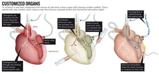 กระบวนการประดิษฐ์หัวใจใหม่